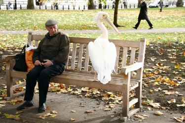 Michael Ellis with Willy the Pelican, London 2010